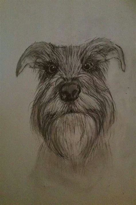 Awesome Schnauzer Sketch